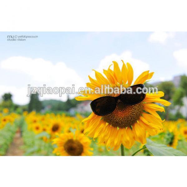 Sunflower seeds sheller-factory price #3 image