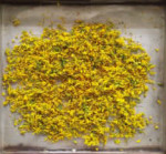 Study on microwave drying technology of rape flower